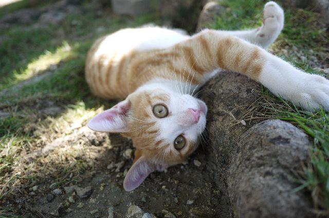 沖縄,奥武島,大城てんぷら店,猫,ネコ