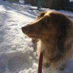 函館 雪 熊本犬