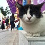 沖縄,移住,国際通り,猫