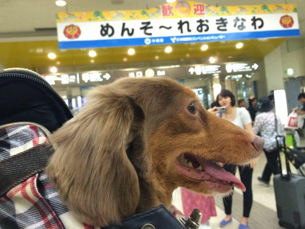 沖縄,移住,犬