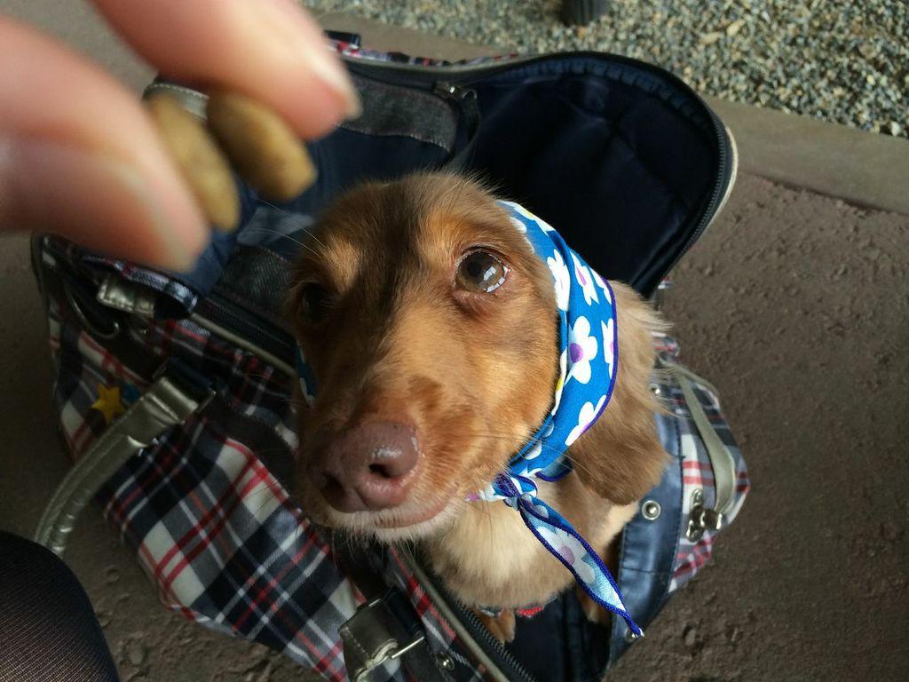成田空港,ペットホテル,犬