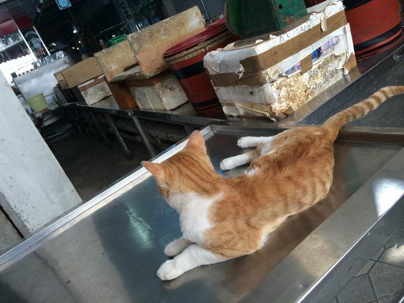 那覇,牧志公設市場,猫