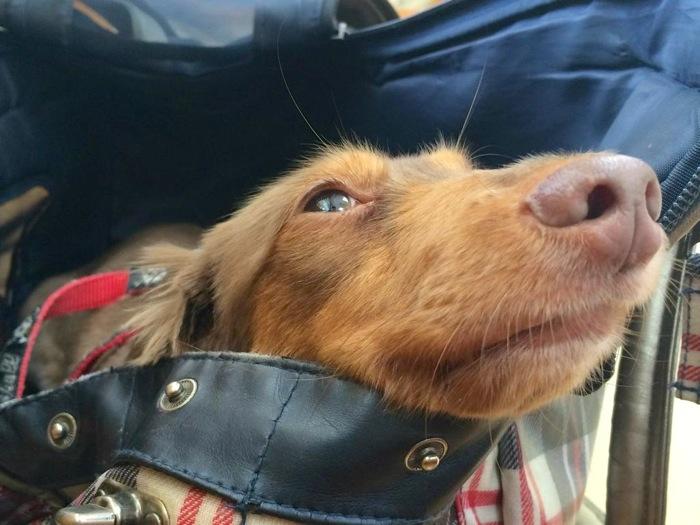 犬,沖縄,バッグ