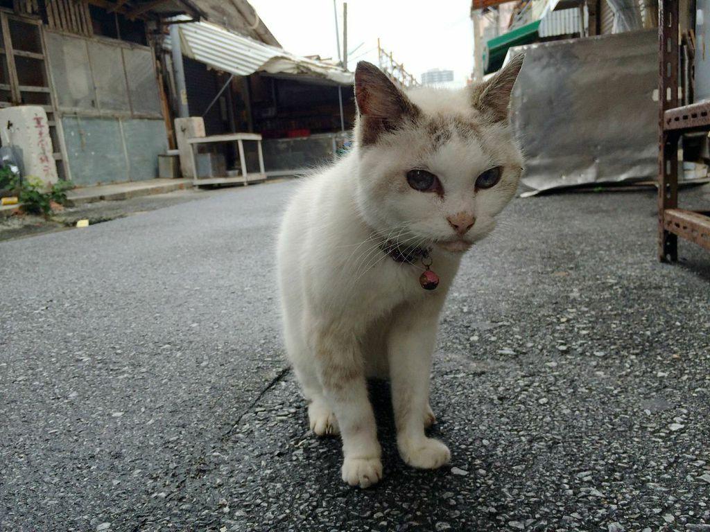 那覇,農連市場,猫