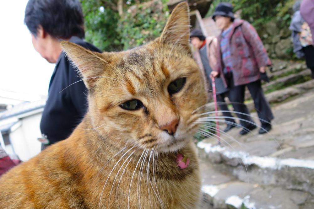 長崎,心田庵,紅葉,猫