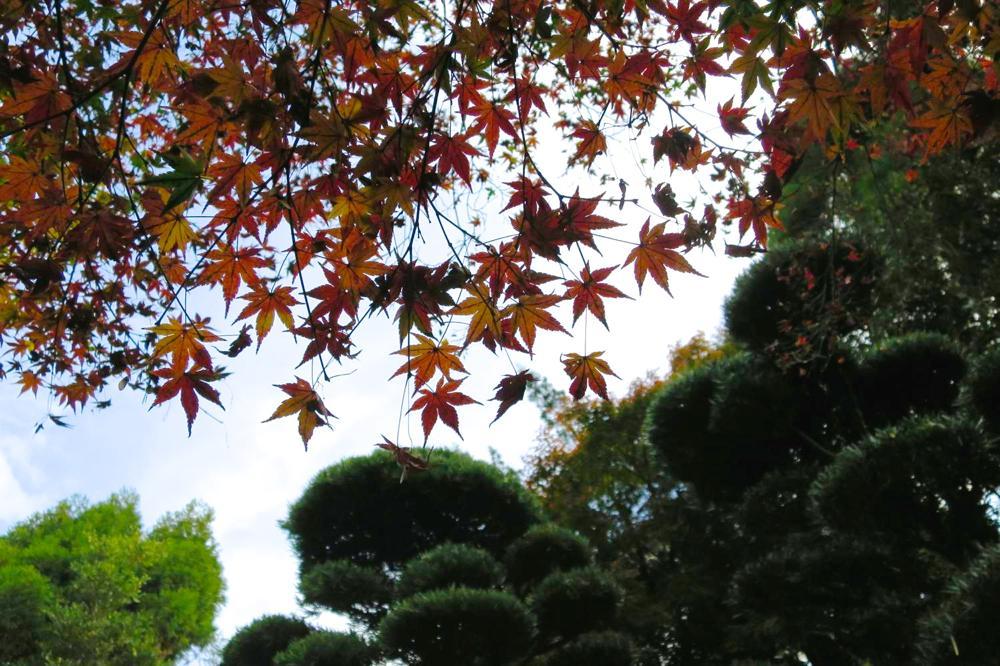 長崎,心田庵,紅葉