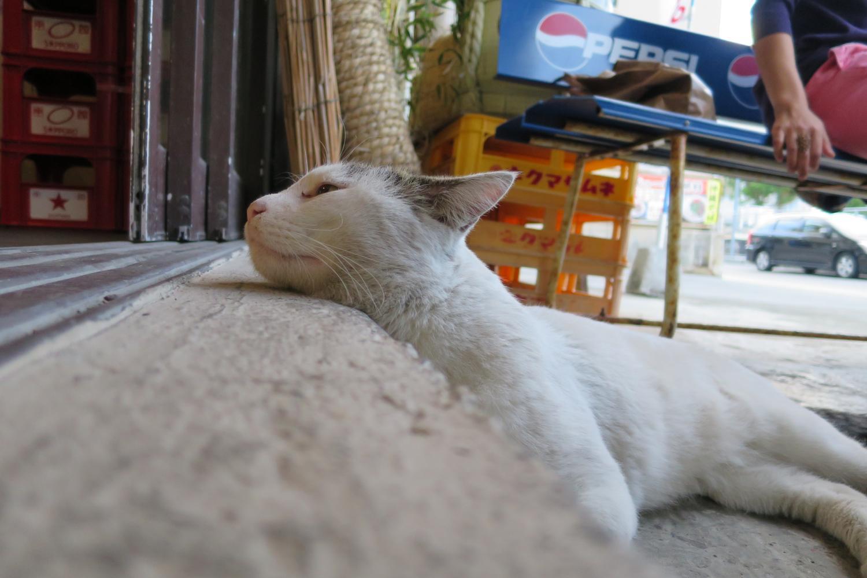 浦添,牧港,おる,居酒屋,猫
