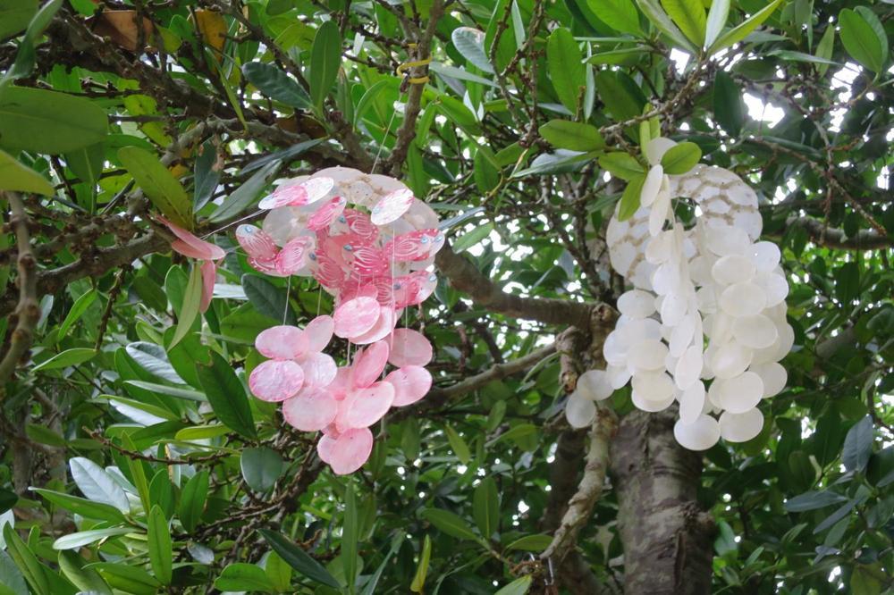 備瀬,フクギ並木,沖縄,本部町