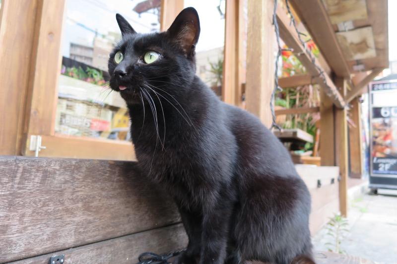 舌が出ちゃってる久茂地の黒猫