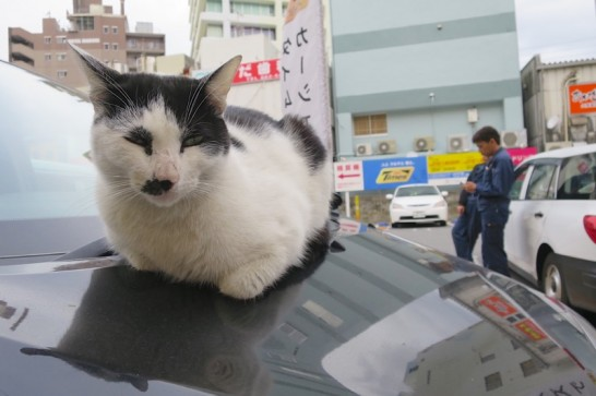 駐車場に止まっているボンネットに、堂々と居座る猫。