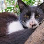 久茂地で昼寝する猫
