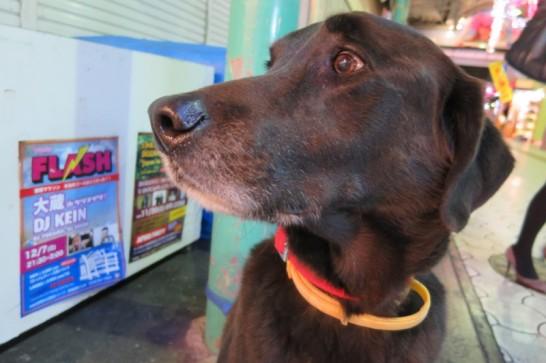 戻ってくる飼い主を不安そうな目をして待つ那覇の犬。