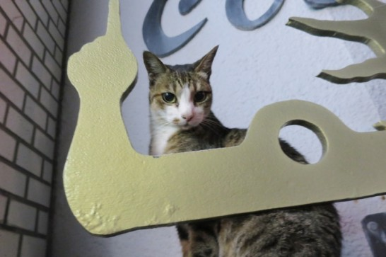 国際通りにいた猫