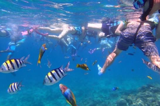 okinawa kerama news snorkeling_040