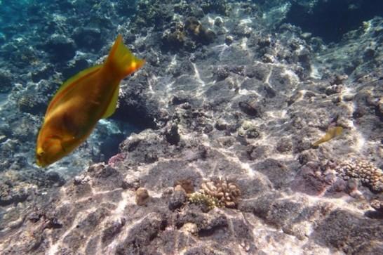 okinawa kerama news snorkeling_045