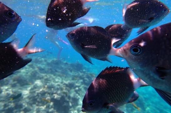 okinawa kerama news snorkeling_053
