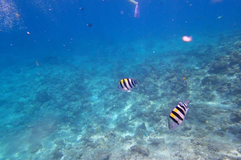 okinawa kerama news snorkeling_070