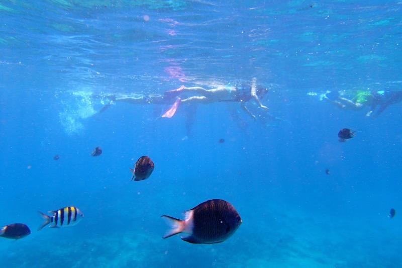 okinawa kerama news snorkeling_081