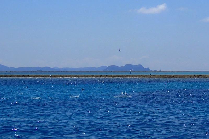 okinawa kerama news snorkeling_098