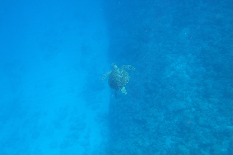 okinawa kerama news snorkeling_120