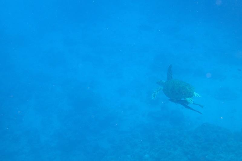 okinawa kerama news snorkeling_121