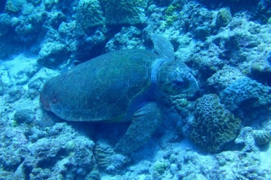 okinawa kerama news snorkeling_123