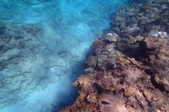 okinawa kerama news snorkeling_137