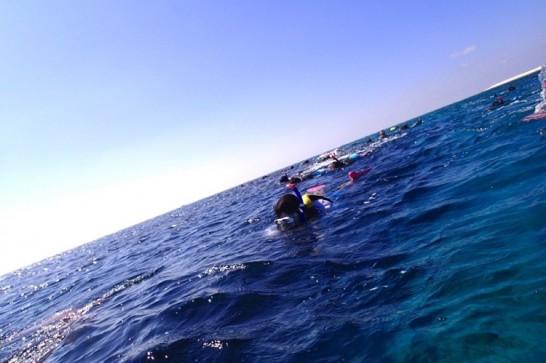 okinawa kerama news snorkeling_143