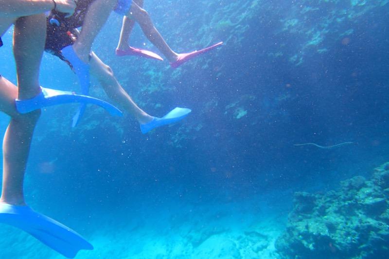 okinawa kerama news snorkeling_160