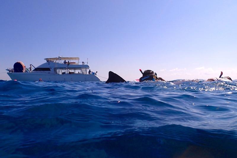 okinawa kerama news snorkeling_171