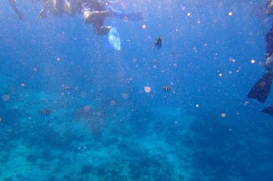 okinawa kerama news snorkeling_173