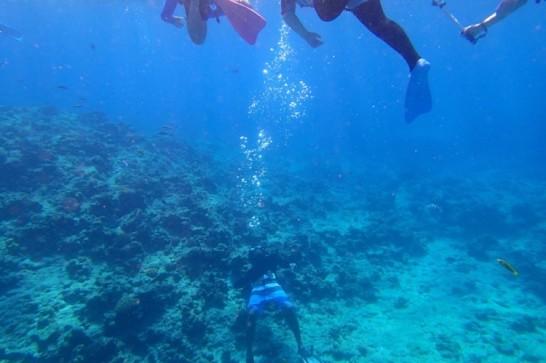 okinawa kerama news snorkeling_176