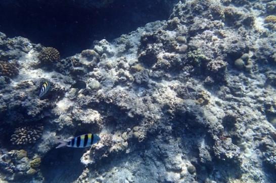 okinawa kerama news snorkeling_179
