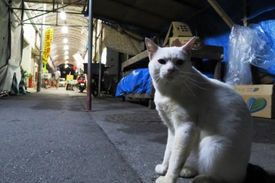 夜の栄町でしゃきんと座る猫