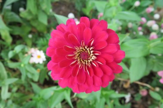 新都心公園の鮮やかな花