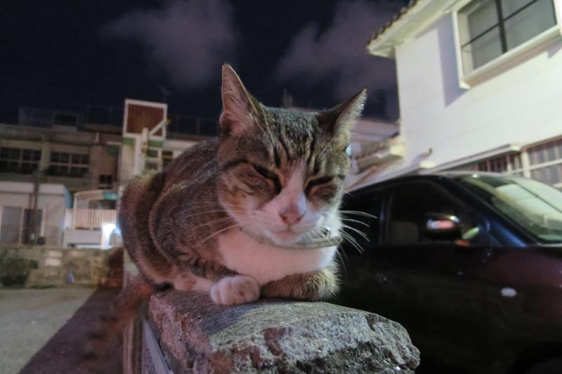 ブロック塀の上でじっと身構える猫