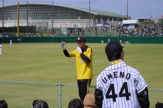 プロ野球,2016年,オープン戦,春季キャンプ,阪神タイガース