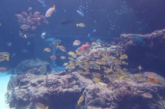 美ら海水族館,沖縄