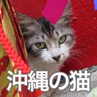 物陰からこっそりこちらを伺う、美栄橋にいたふわっふわの子猫。