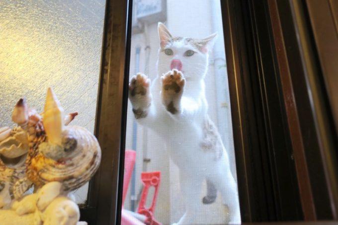 リゾムでご飯食べようと思ったら、網戸の外からカリカリしてきた猫