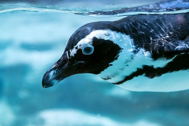 SEOといったらペンギン