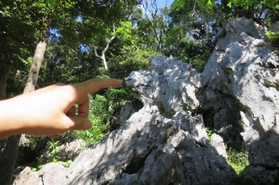 大石林山,沖縄北部,国頭村,やんばる