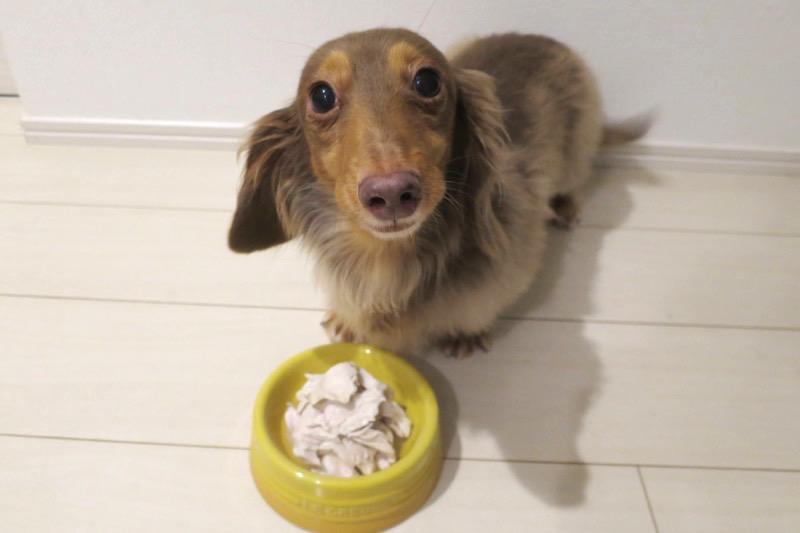 熊本犬、9回目の誕生日を鶏肉で祝う