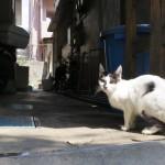 久茂地の路地にいた猫
