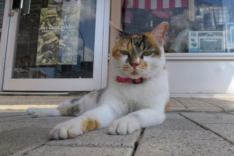 不貞腐れてるっぽいコザの猫。
