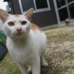 宮古島にいた猫2匹。