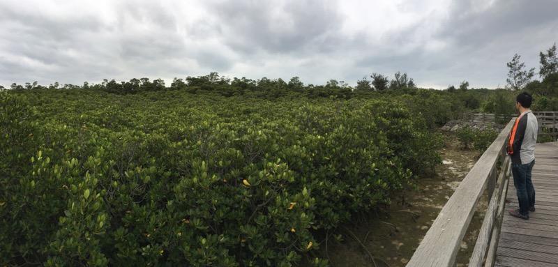 島尻マングローブ,宮古島