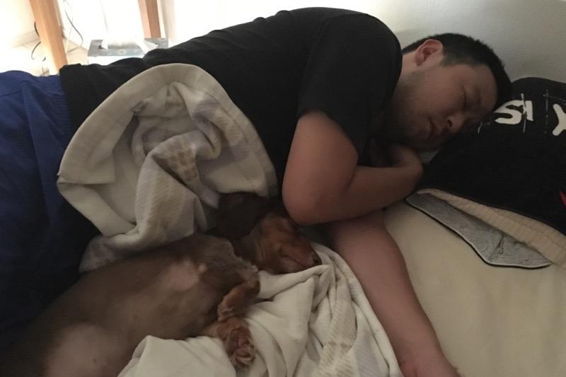ご主人サマーと同じ格好で寝る熊本犬
