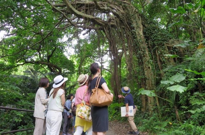 ウォーキングツリーとも呼ばれるガジュマル