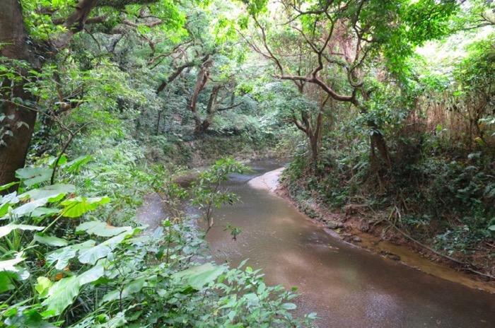 その昔、この川は鍾乳洞から滴る水滴を集めた川だったに違いない